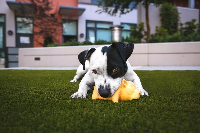 A kutyatáp táplálja a kedvencét