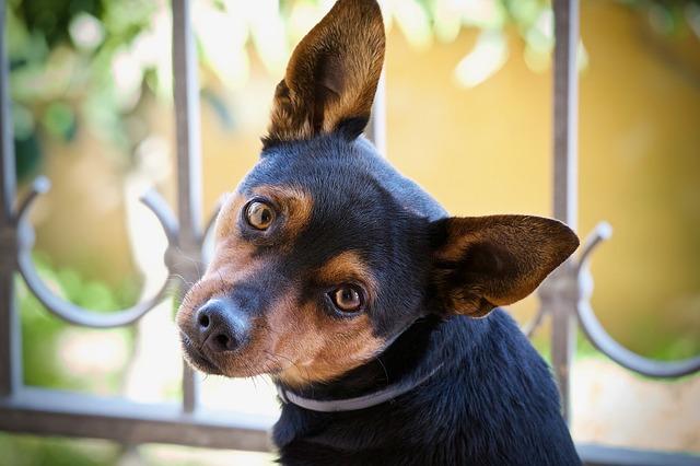 A kutyatáp formáiról általánosságban